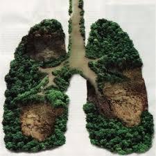 polmoni verdi