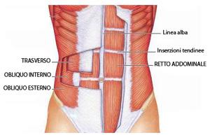 Anatomia-addominali